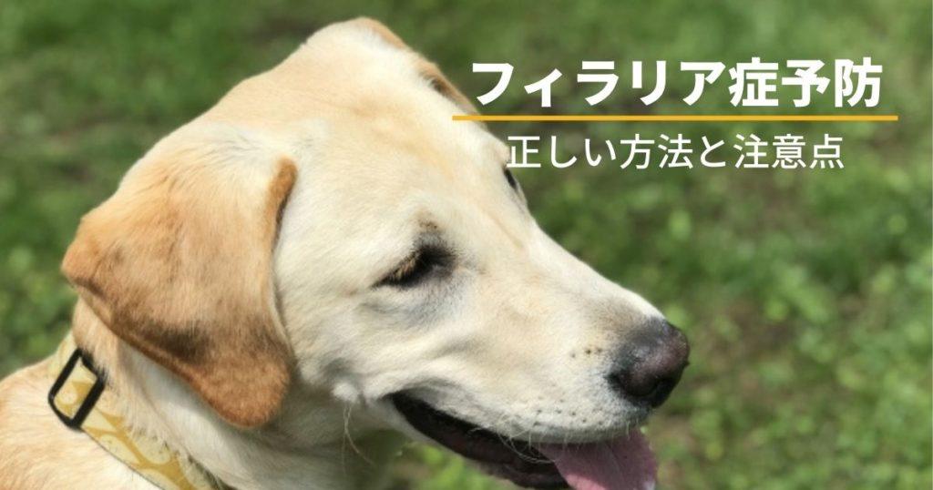 フィラリア予防をしている犬