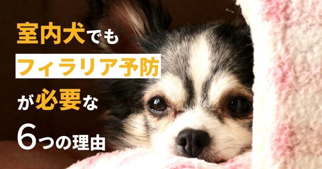 室内犬でもフィラリア予防が必要な犬