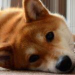 留守番する犬のための熱中症対策。6つのポイント【獣医師監修】