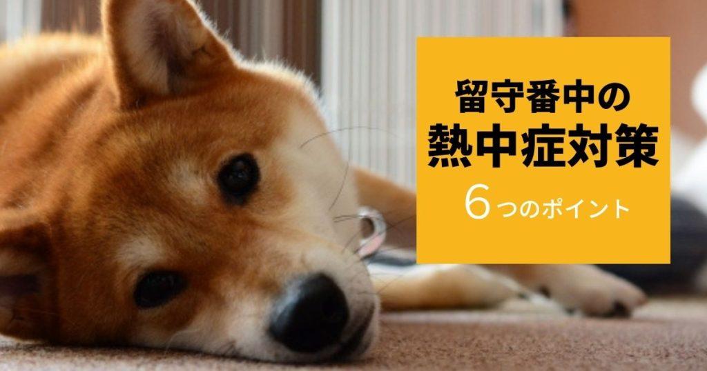 熱中症対策している部屋で留守番する犬
