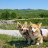 犬との旅行に必要なマナー