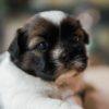 子犬の社会化トレーニング。慣れておくと必ず役立つもの7選【獣医師監修】