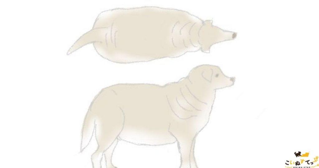 暑さに弱い肥満の犬