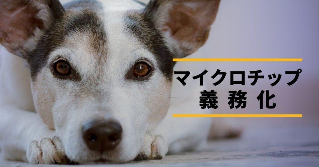 マイクロチップを装着している犬