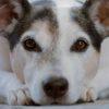 【2022年6月義務化】犬のマイクロチップ義務化になった時するべき事