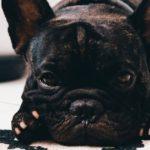熱中症になりやすい犬の特徴8つ【獣医師監修】