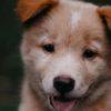 犬のストレス。気づいてあげたい行動3選【獣医師監修】