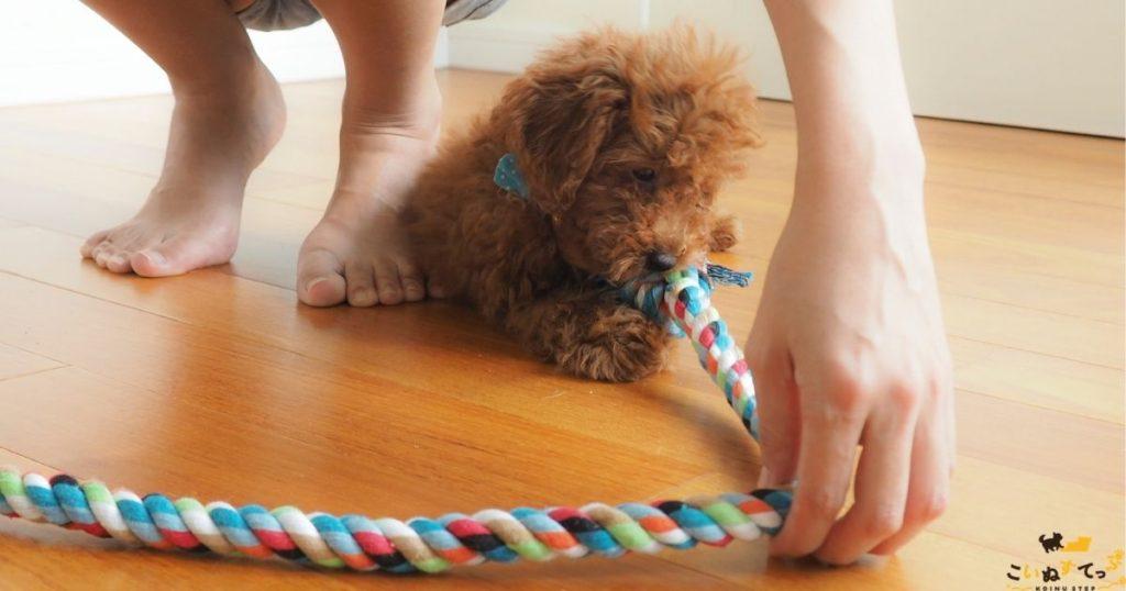 台風を怖がる犬と遊んでいるところ
