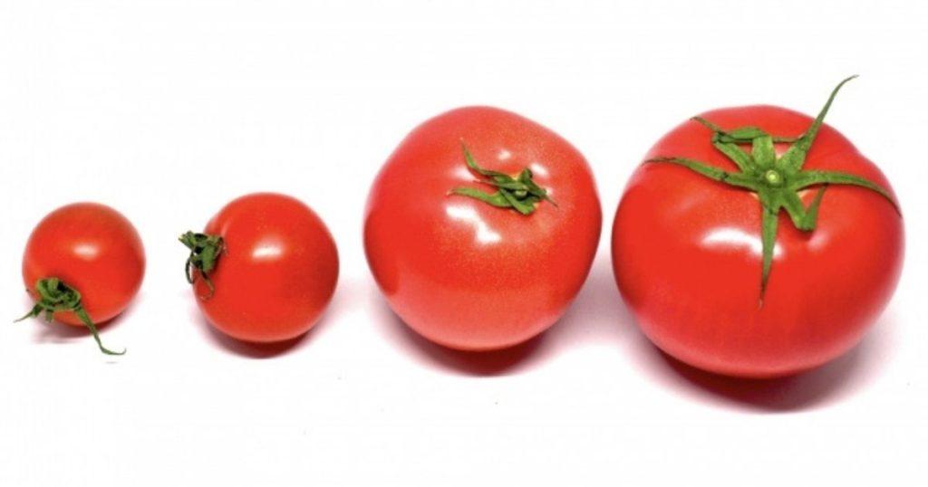 犬が食べられる夏野菜でるトマト