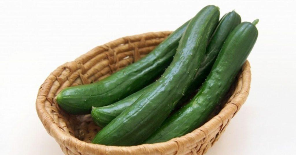 犬が食べられる夏野菜であるきゅうり
