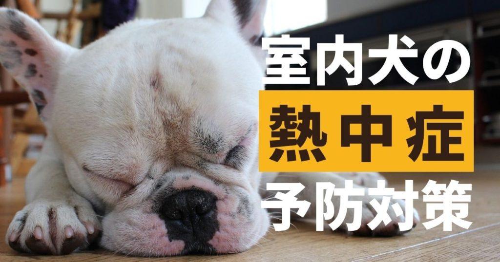 熱中症対策をしている室内犬