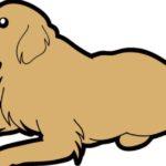 犬の熱中症!冷やすべき4つの場所【獣医師監修】