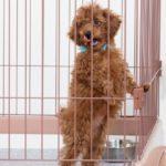 犬の留守番中の不安を小さくする5つの方法【獣医師監修】