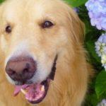 梅雨も犬との散歩を楽しむ4つのコツ【獣医師監修】