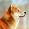 犬がフィラリアに感染した時の症状は?【獣医師監修】