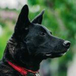 犬が緊張しているサインを読むポイント【獣医師監修】