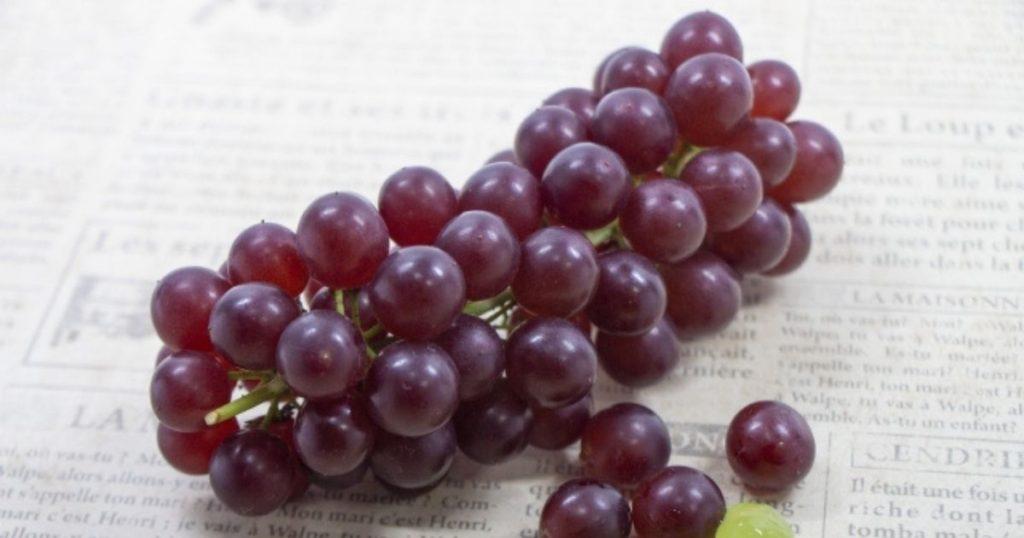 犬が食べられる夏の果物であるブドウ