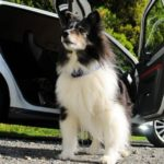 犬と車に乗るときの6つのポイント【獣医師監修】