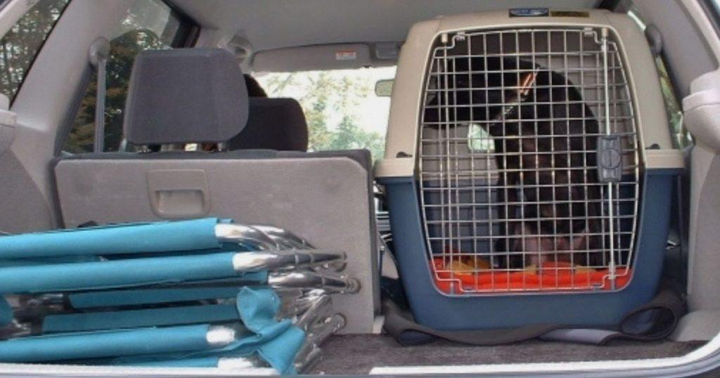 車でクレートに入っている犬