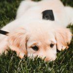犬に散歩中のにおいかぎが必要な3つの理由【獣医師監修】