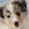 子犬の社会化で慣らせておきたいもの6選【獣医師監修】