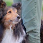 服につく犬の毛への対策4選