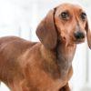 愛犬をペットホテルを利用する前にしておくべき準備【獣医師監修】