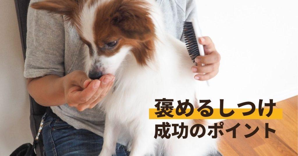 褒めるしつけをしている犬