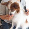 犬の褒めるしつけを効果的に進めるためにしておきたい2つのこと【獣医師監修】