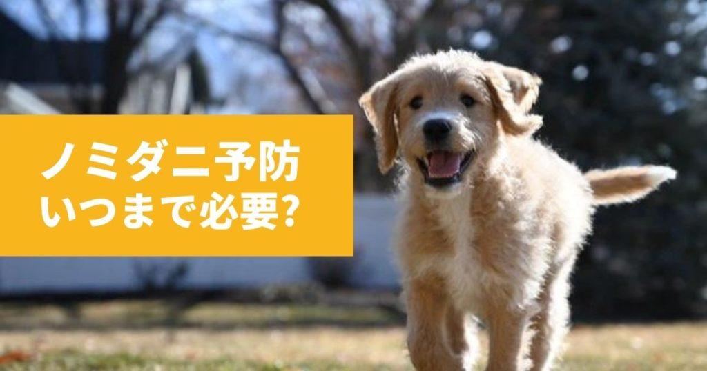 ノミダニ予防の時期を守っている犬