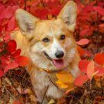 犬に絶対与えてはいけない秋の味覚と一緒に楽しめる食材【獣医師監修】