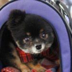 犬との「同行避難」。必ず知っておくべきこと