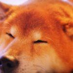 被災時の備えとなる犬のしつけ5選【獣医師監修】