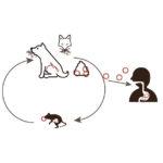 【2021年】エキノコックス感染の問題とは?愛犬との暮らしで必要な対策は?【獣医師監修】