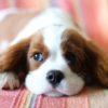 犬の抜け毛対策と掃除のテクニック【獣医師監修】