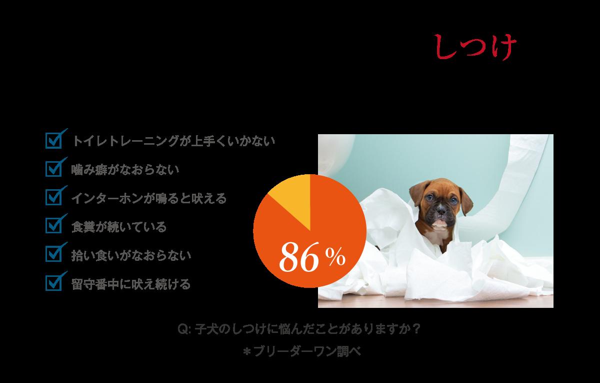 【こいぬステップ】サイトより画像引用「86%の飼い主さんが子犬のしつけに悩みを抱えています」